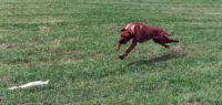 KHANDA LURE COURSING